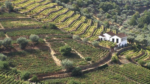 Bild 1 von 7: Im Hinterland der Costa Verde gedeiht der Portwein.
