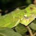 Geliebt und gejagt - die Tiere Tobagos