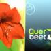 Bilder zur Sendung: Querbeet Classix