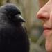 Bilder zur Sendung: Tiere verstehen