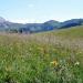 Kräuterwelten der Alpen