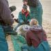 Kanada - Die Kegelrobben von Sable Island