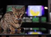 Tierisch süß! Der Haustier-Report