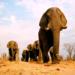 Bilder zur Sendung: Afrika - Das magische Königreich