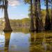 Durch Louisiana entlang des Mississippi