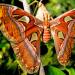 Freaks auf sechs Beinen - Unglaubliche Insekten