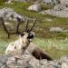 Polartag - Skandinaviens Wildnis im Sommer