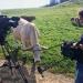 Im Revier der freien Rinder - Der Wander-Boom, das Kuh-Urteil und seine Konsequenzen