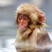 Bilder zur Sendung: Affenwelten
