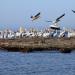 Bilder zur Sendung: Donau - Lebensader Europas