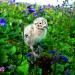 Bilder zur Sendung: Zugvögel