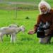 Bilder zur Sendung: Schafe - Erfolgreiche Wollknäuel