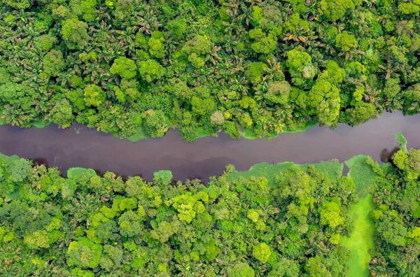 Bild 1 von 2: Die Küsten des Landes zwischen Pazifik im Westen und Karibik im Osten sind mit rund 35.000 Hektar Mangrovenwäldern bewachsen.