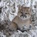 Wildnis Nordamerika - Schöne neue Welt