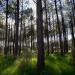 Der Wert der Wälder