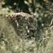 Tödliches Tempo - Wilder Dschungel