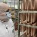 Fleischindustrie im Check