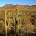 Das Wüstenparadies