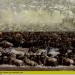 Bilder zur Sendung: Serengeti - Wettlauf ums Leben