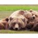 Bilder zur Sendung: Der Bärenmann