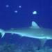 Bilder zur Sendung: Fischraub in der Südsee