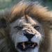 Kielings wildes Afrika