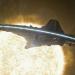 Bilder zur Sendung: Stargate: Universe