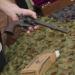Die Waffensammler