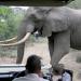 Im Reich der Königselefanten - Das Tembe-Wildreservat in Südafrika