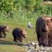 Mythos Amur