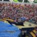 Bilder zur Sendung: Der Killerwal