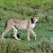 Rift Valley - Der große Graben