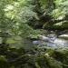 Die schönsten Wälder im Norden