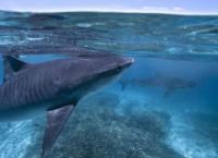 Das Große Barriere-Riff