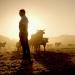 Weg vom Fleisch? Alternativen für eine nachhaltige Ernährung