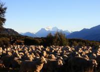 Abenteuer Neuseeland