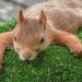 Die verrückte Welt der Hörnchen