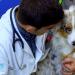 Die Tierärzte - Ein Beruf aus Leidenschaft