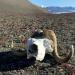 Nach dem Eis - Was passiert mit der Arktis?