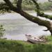 Shannon River - Ein Fluss wie ein Gedicht