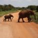 Bilder zur Sendung: Zur�ck in die Wildnis - Ein kleiner Elefant auf dem Weg in die Freiheit