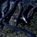 Wanderer zwischen den Welten - Das Rätsel der Aale