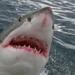 Bilder zur Sendung: Geheimnisse der Tiefe: R�uber der Ozeane