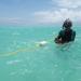 Die Meeresgärtner von Sansibar