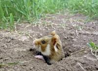 Der kleine Held vom Hamsterfeld