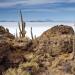 Erlebnis Erde: Die Anden - Natur am Limit (2)