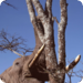 Bilder zur Sendung: Großer Elefant - Kleiner Elefant