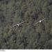 Himmelsvögel Ð Die Kraniche von Bhutan