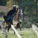 Camelot: Die Hure des Königs? (Folge 9)
