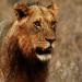 Safari-Paparazzi: Wildlife pur (6)